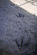 Theropod footprint at Valdecevillo site in ENCISO La Rioja region Spain