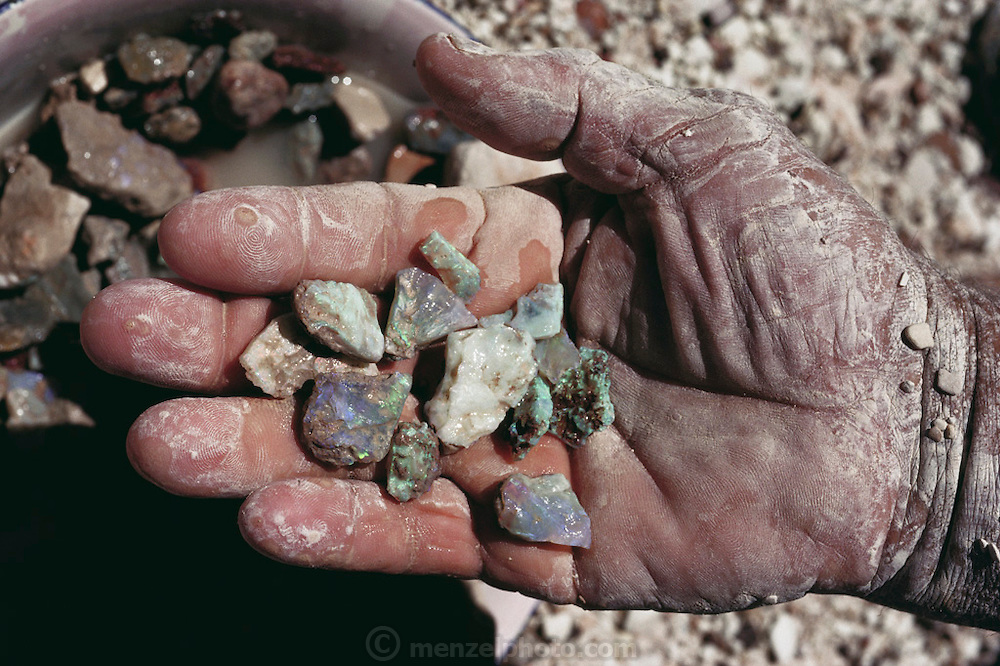 An opal miner displays a handful of opals. Opal is a form of hydrous silicon oxide. The stones are conglomerates of microscopic spherical particles - opal is never found as a true crystal. The blue/green and dark blue forms seen here are considered to be precious. Opal has a beautiful colored luster due to the varied dispersion of light from its structure. Opal may also be seen in fossils, where it replaces the organic matter (especially bones) in buried remains. These stones were photographed at Lightning Ridge in Australia, the world's most important source of precious opal.  [1989].
