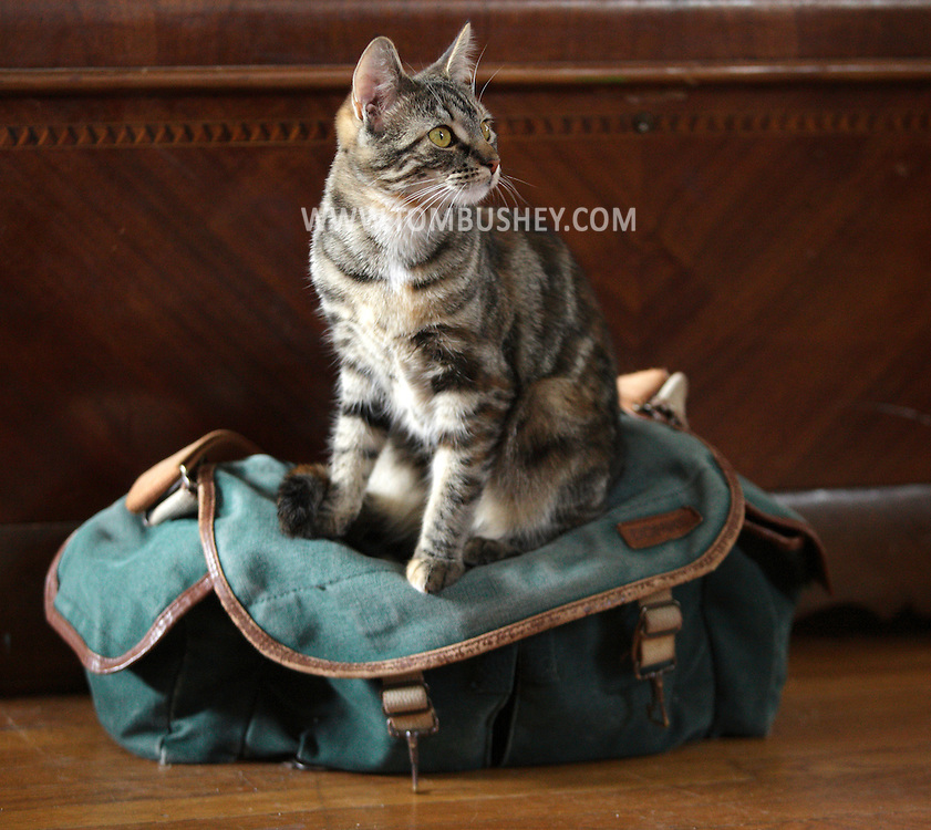 Middletown, New York - A kitten sits on a photographer's bag on April 9, 2010.