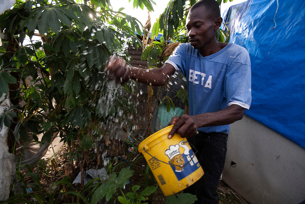 A man give some  water to his corn  garden at makeshift refugee camp, La Piste, in Port-au-Prince, Haiti on July 17, 2010. La Piste (French for &quot;runway&quot;)is a settlement sprawled across the site of a disused airport and now home to an estimated 20,000 earthquake survivors living in makeshift structures.<br /> Six month after a catastrophic earthquake measuring 7.3 on the Richter scale hit Haiti on January 13, 2010, killing an estimated 230,000 people, injuring an estimated 300,000 and making homeless an estimated 1,000,000.
