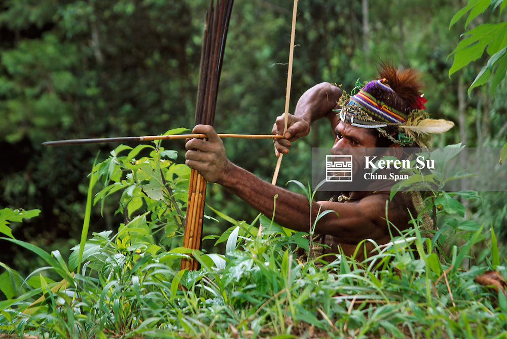 Huli wigman shooting with arrow and bow, Tari, Southern Highlands, Papua New Guinea