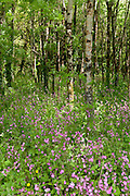 Pink flowers and wood