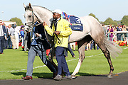 LOGICIAN is led around the Parade Ring before winning The Group 1 William Hill St Leger Stakes over 1m 6f (£700,000) during the fourth and final day of the St Leger Festival at Doncaster Racecourse, Doncaster, United Kingdom on 14 September 2019.