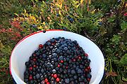 Wild blueberries and rowan berries.