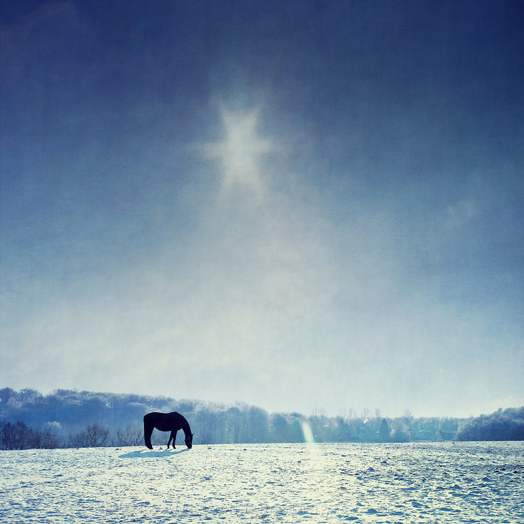 Horse on a snow covered paddock on a sunny winter day.<br />