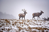 2018_03_02_Deer_snow_SSI