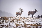 2018_03_02_Deer_snow_SSI