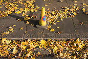 No parking traffic cone and matching yellow autumnal leaves on south London street.