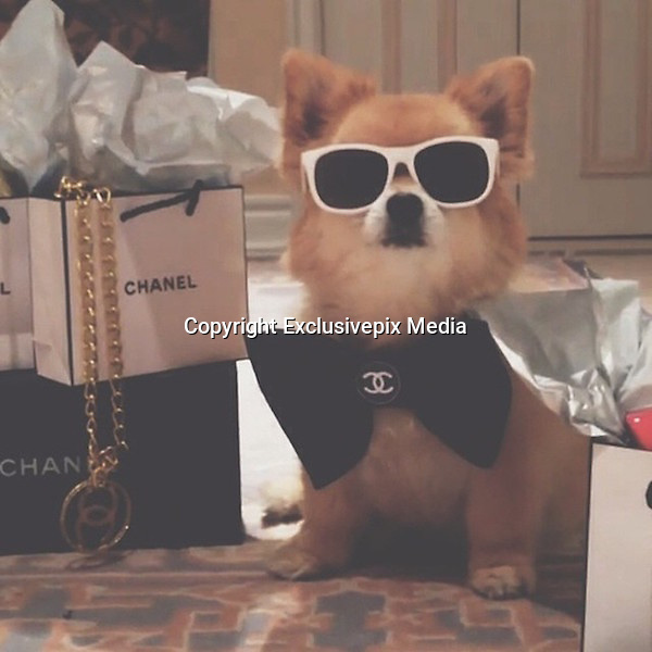 Forget the Rich Kids of Instagram... these are the DOGS who live more luxurious lives than you: New super-rich trend for sharing photos of overly pampered pets<br /> <br /> The super-rich's dogs are often seen as a fashionable accessory to go along with shoes and handbags, but some pets are enjoying with an extravagant existence of their own that is unthinkable to the average person.<br /> The Rich Dogs of Instagram, a new photo account that draws inspiration from the opulence on the Rich Kids of Instagram, shows how having a dog's life isn't always a bad thing.<br /> It displays the wealthy's pampered pooches sunbathing in crystal clear pools, rolling around in wads of cash and flying on private jets.<br /> The dogs probably cannot revel in the jealousy of others the way their masters can, though the canines do seem to be making the most of the high life.<br /> <br /> While the Rich Kids may coast through life using money from their parents, their pets don't even have to worry about paying for anything.<br /> Using the hashtag #rdoi, the account has posted 50 pictures with assorted wealthy dog jokes.<br /> Rich Instagram users' pooches are seen getting ready to do the 'doggy paddle' in indoor mansion pools.<br /> Another dog sat in a mini Audi Spyder says the new car is 'bad to the bone'.  <br /> <br /> A picture of a pooch surrounded by the conquests of a luxury shopping trip is captioned 'throw it in the doggy bag'. <br /> The trust fund puppies probably do not know how good they have it, enjoying luxury vacations and in exotic locations beyond most hardworking humans' wildest dreams.<br /> However, several do a good job of looking smug for the camera, no doubt confident in the fact that they are the 'one percent' of the millions of dogs on the Internet.<br /> Doggies show off their style as their owners dress them up in extravagant designer clothes or add to the animals' natural fur with an expensive, fluffy coat. <br /> <br /> The array of poodles, pugs and chihuahuas also seems particularly fond of high-class champagne, with bottles of brands such as Dom Perig