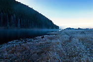 Australian Shepherd, dog, Big Hole River, Big Hole Valley, northwest of Wise River, Montana, Winter, dawn, fog.