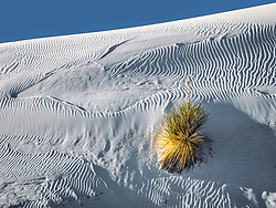 Lone yucca plant on side of white gypsum dune at White Sands national Monument
