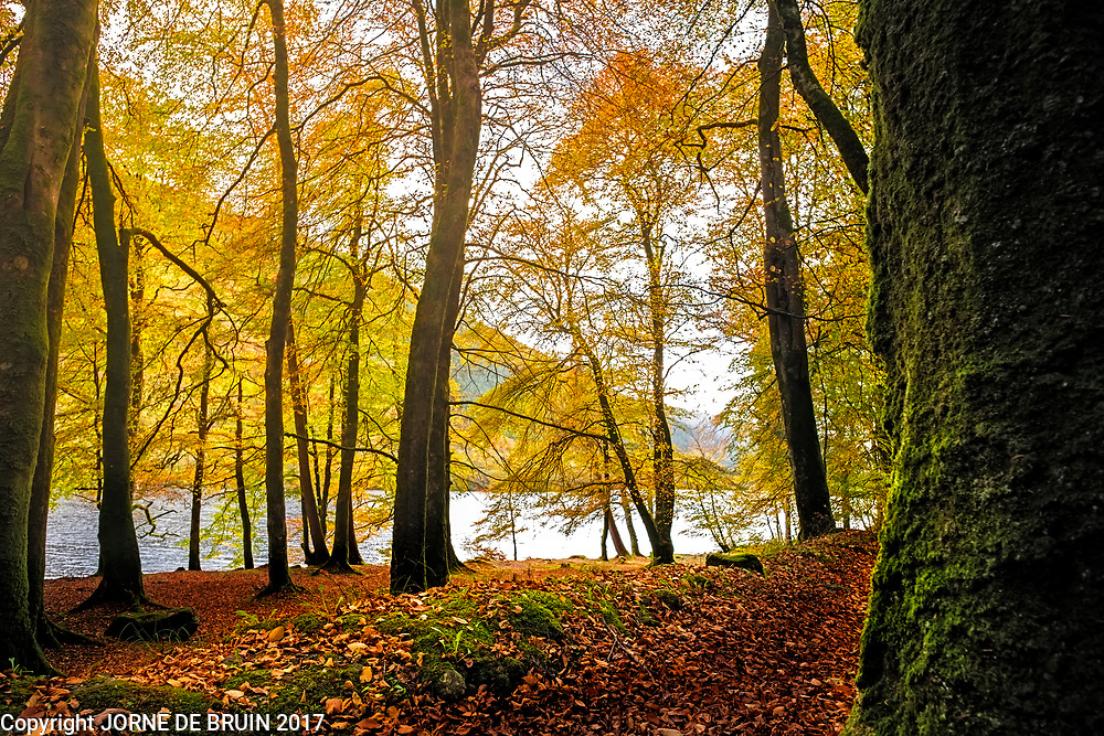 Trees in autumn splendour in the Trossachs in Scotland