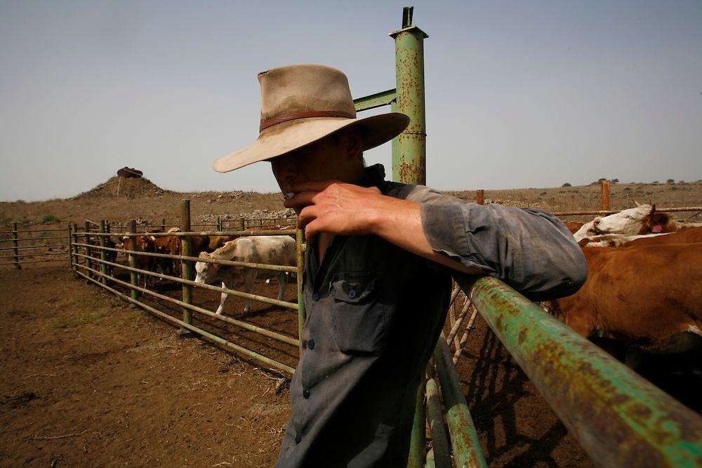 Yehuda Gilad 27 smoking a cigarette after ..gathering the cattle in Moshav Yehonatan in the Golan height, Israel. Monday October , 2, 2007....