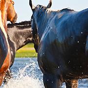 20100701 Timberhaze Quarter Horses