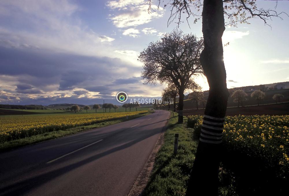 Estrada na Austria/ Road in Austria.Plantacao de Canola/ Plantation of Rapaseed, bright yellow flowering member of the family Brassicaceae..Raps.Foto: Marcos Issa/Argosfoto