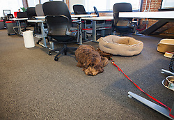 Scenes from Pinterest Headquarters in San Francisco, California.  Dogs have a place to stay at the office.