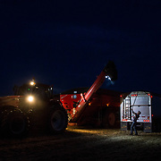 Hans Shuman, 25, a member of the Wolgemuth Brothers wheat harvesting crew from Lancaster County, PA, covers the evening's last truck full of grain. Crowell, TX, May 25, 2017.