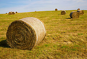 Round hay bales on hillside in field of freshly cut grass, Suffolk, England, UK