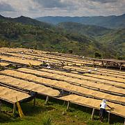 The drying tables at Dukundekawa Cooperative are shown on Thursday, April 27, 2017.  (Joshua Trujillo, Starbucks)