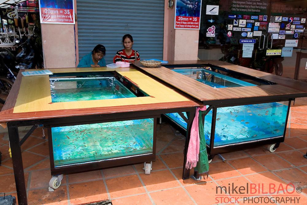 fish tanks for fish masagge. Siem Reap, Cambodia, Asia