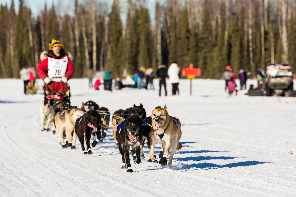 Musher Hugh Neff competing in the 44th Iditarod Trail Sled Dog Race on Long Lake after leaving the restart on Willow Lake in Southcentral Alaska.  Afternoon. Winter.