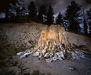AA03482-03...COLORADO - Petrified stump in Florissant Fossil Beds National Monument.