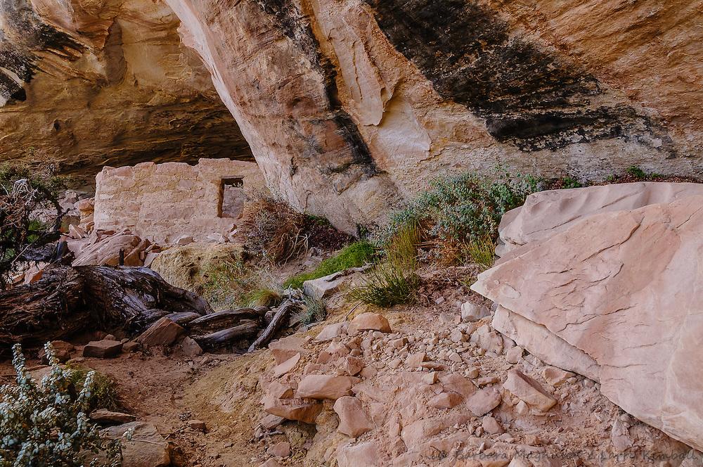 Cold Springs Cave ruins; Comb Ridge, UT