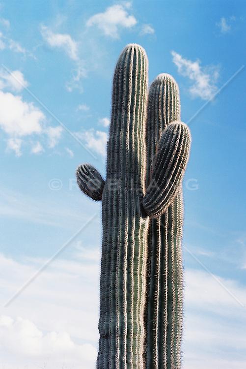 Cactus plant against sky