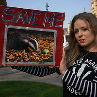 House of Commons MPs' Debate on Badger Cull