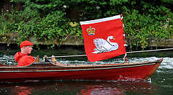 © licensed to London News Pictures. LONDON, UK.  18/07/11. Swan Upping takes place on the River Thames today (18 July 2011). Swan Upping dates from medieval times, when The Crown claimed ownership of all mute swans which were considered an important food source for banquets and feasts. Today, the cygnets are weighed and measured to obtain estimates of growth rates and the birds are examined for any sign of injury, commonly caused by fishing hook and line. The cygnets are ringed with individual identification numbers by The Queen's Swan Warden, whose role is scientific and non-ceremonial. The Queen's Swan Marker produces an annual report after Swan Upping detailing the number of swans, broods and cygnets counted during the week. Mandatory Credit Stephen Simpson/LNP