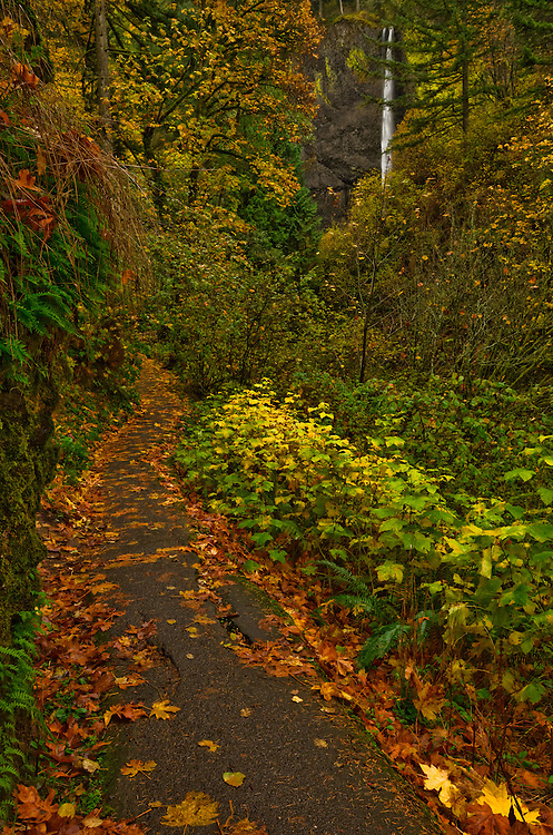Hiking trail to Latourell Falls in the Columbia River Gorge