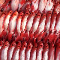Red snapper at wet market on Kota Kinabalu waterfront, Sabah, Borneo.