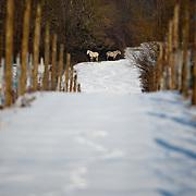 Burie sous la neige