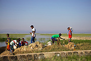 Fisherman gather to offload their catches in the early morning sun, Lake Hawassa, Ethiopia.