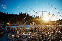 JEROME A. POLLOS/Press..Sun filters through the wild grasses and melts the fallen snow Monday on the west end of Fernan Lake.