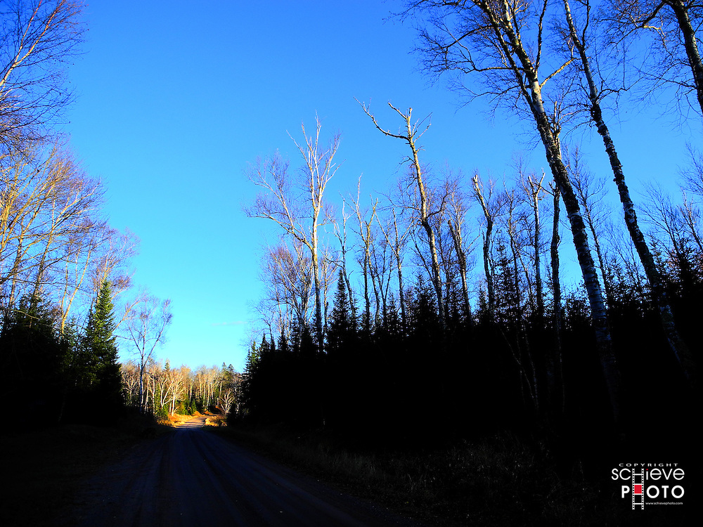 Late fall trees in the Chequamegon National Forest in Northern Wisconsin.