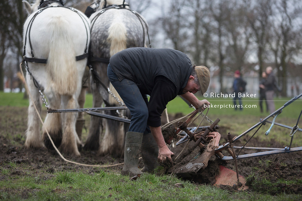 Irish ploughman Tom Nixon leads Shire horses Nobby and Heath as they harrow an on-going heritage wheat-growing area in Ruskin Park, a public green space in the borough of Southwark, on 9th February 2018, in London, England. The Friends of Ruskin Park are again growing heritage wheat and crops together with the Friends of Brixton Windmill and Brockwell Bake Association. Shire horses are descended from themedievalwarhorse but are a breed under threat. Operation Centaur, which maintains the last working herd of Shires in London is dedicated to the protection and survival of the breed. It is an organization set up to promote the relevance of the horse as a contemporary working animal in partnership with humans. This takes the form of heritage skills in conservation and agriculture, transportation, discovery, learning and therapy.