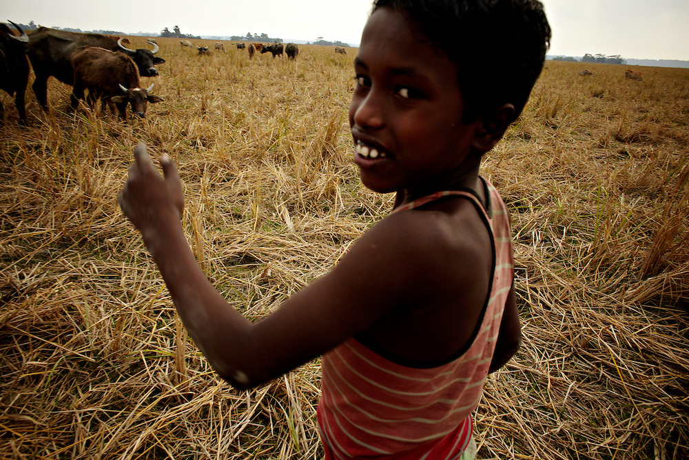 A boy is hearding cows on Chaar Patila...This area in the south of Bangladesh has been called ground zero of climate-change due to heavy river and ocean erosion. The lowlying area is also hugely affected by cyclones and rising sea-levels...By the Mouth of Ganges, at the Bay of Bengal is the Island of Bhola. This home of about two million people is considered to be ground zero of climate change. Half the island has disappeared in the past 40 years, and according to scientists the pace is not going to slow down. People pack up and leave as the water get closer. Some to a nearby embankment, while those with enough money move further inland, but for most life move on until the inevitable. It's always about survival for the people in one of the worlds poorest countries...Photo by: Eivind H. Natvig/MOMENT
