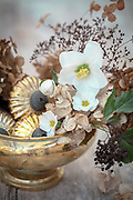 Winter Still Life with hydrangeas, gold glass decoration and Helleborus niger