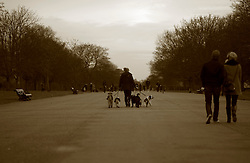 UK ENGLAND LONDON 20DEC11 - A dog walker takes several dogs for a walk in Hyde Park, central London.....jre/Photo by Jiri Rezac....© Jiri Rezac 2011