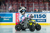 KELOWNA, CANADA - NOVEMBER 29: Rocky Raccoon, the  mascot of the Kelowna Rockets rides his Polaris outlaw onto the ice against the Prince George Cougars on November 29, 2017 at Prospera Place in Kelowna, British Columbia, Canada.  (Photo by Marissa Baecker/Shoot the Breeze)  *** Local Caption ***
