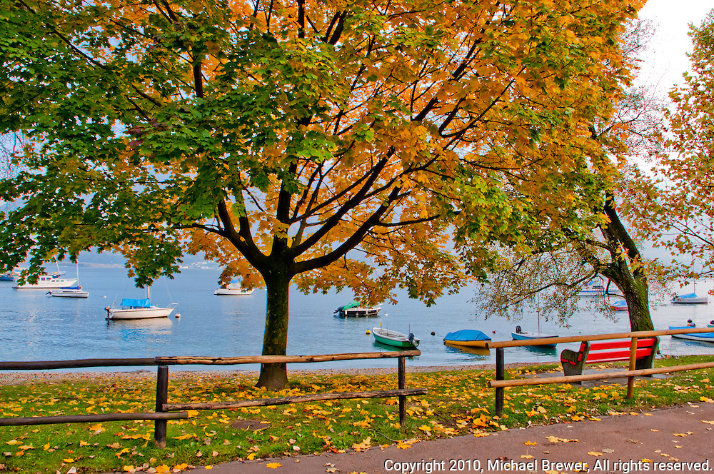 Red bench and yellow autumn tree along the Lago Maggiore in Minusio, Ticino, Southern Switzerland.