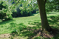Late spring, early summer, Barnett's Demesne, Malone, Belfast, N Ireland, UK, parkland, trees, foliage, sunshine, shadows, 200905312525.<br />