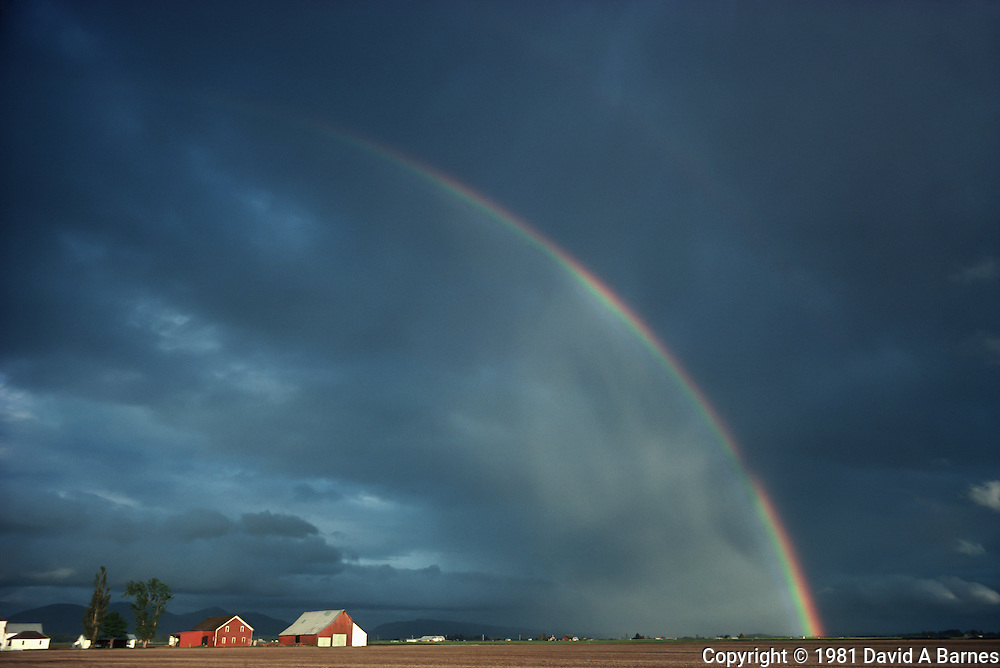 Rainbow over farmland, Skagit Flats, Skagit County, Washington State, USA