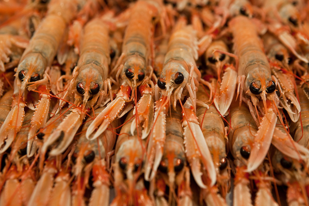 Seafood displayed for sale at the Central Market in Cadiz, Andalucía, Spain.