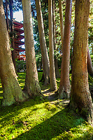 Tree trunks in the Japanese Gardens in Golden Gate Park, San Fransisco, California, USA.