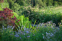 Geranium pratenses, honeysuckle, cotinus and crocosmia foliage around bench at Glebe Cottage