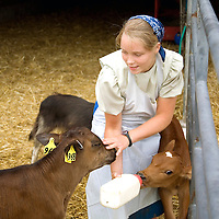 Feeding a day old calf.   Springwood Organic Farm.  Kinzers, PA.<br /> <br /> &copy;Patrice Gilbert