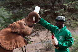 October 5, 2018 - Nairobi, Kenya - First Lady visits baby elephants at the Sheldrick Elephant Orphanage  (Credit Image: ? Andrea Hanks/White House via ZUMA Wire/ZUMAPRESS.com)