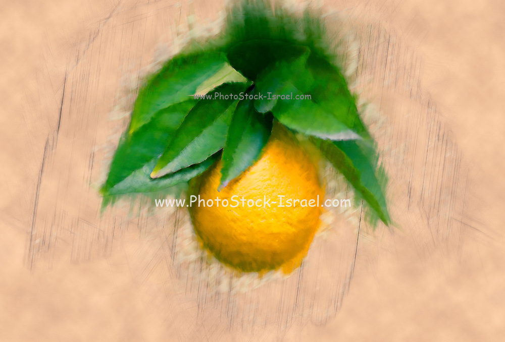 Digitally manipulated Ripe orange on a tree before picking